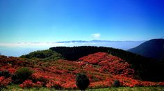 Azalea of Katsuragi Plateau (Nara Japan)