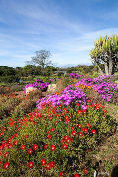 Kirstenbosch Botanical Gardens Cape Town by christoph.rebok, via Flickr
