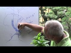 Bonsai Tutorials for Beginners: How to Attain Trunk Taper - YouTube