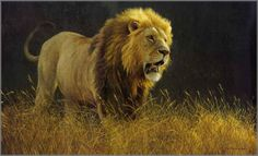 Robert Bateman - Into the Light - Lion