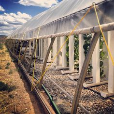 Roll-up-sidewall-hoop-house-with-towers Cool a Greenhouse