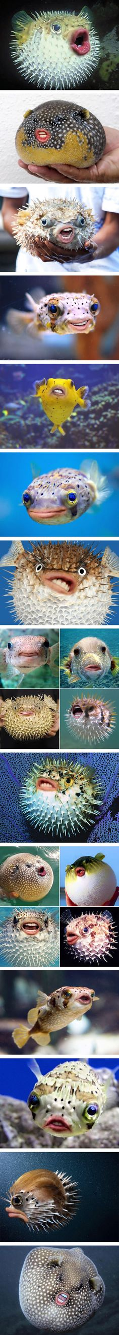 Puffer Fish With Trump's Mouth Is The New Important Thing