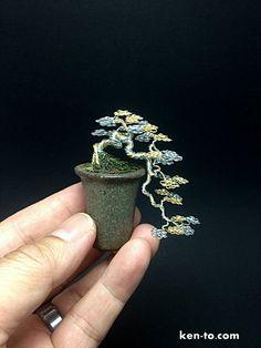 Stupendous 20 Best Jade Plants Images Jade Plants Bonsai Garden Bonsai Plants Wiring 101 Photwellnesstrialsorg