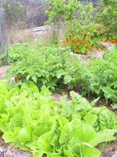 Vegetable Gardening Tips on planning your garden, raised beds, veggies to grow, seedlings, soil & more ...   The Micro Gardener