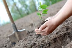Nature and Environment as seen by Rabindranath Tagore Earth Day History, Green Funeral, Arbour Day, Companion Planting, Growing Tree, Apple Tree, Go Green, Permaculture, Lawn And Garden