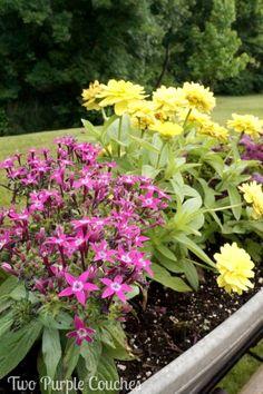 Pretty Window Box Planters / Summer Garden Tour