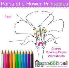 Use for Spring Science Lab. Parts of a Flower Color and Label. Includes reference chart