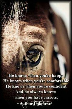 #Truth! #Horses #Equestrian