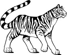 Bengal Tiger: The Bengal tiger is a large, striped cat