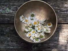 Margaritas en un bol / daisies in a singing bowl My Flower, Flower Power, Wild Flowers, Beautiful Flowers, Beautiful Things, Hedges, Floral Wedding, Herbalism, Decorative Plates