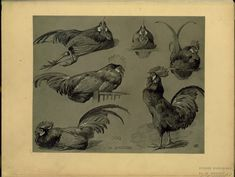 "Aesthetic Sharer ZHR on Twitter: ""Bird Painting ""Animal Srudies"" French painter Mathurin Méheut (1882-1958)… """
