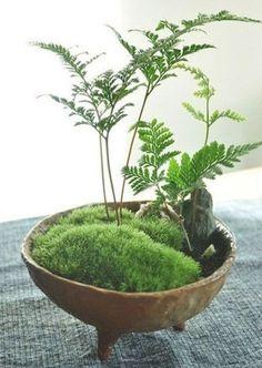 Air Plants, Garden Plants, Indoor Plants, House Plants, Garden Web, Balcony Garden, Garden Design, Indoor Water Garden, Dish Garden
