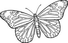 38 butterfly line drawing . Free cliparts that you can download to you ...