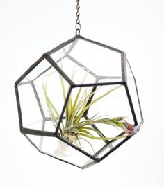 What's better than a terrarium? A gorgeous, glass, hanging terrarium!  (This one even looks good without a plant!)