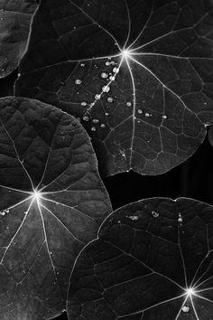 GRIGORY PIL schwarz - weiß  black - white