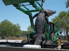 Local teen bags biggest gator ever caught in Texas
