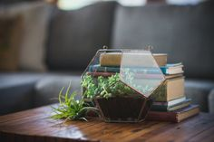 NEW  Half Dodecahedron Glass Terrarium  hanging by ABJglassworks