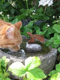 kitty cats - pics of cats - cat health - cat at work - funny cats picture I Love Cats, Crazy Cats, Cute Cats, Funny Cats, Cat Garden, Garden Art, Garden Whimsy, Summer Garden, Photo Chat