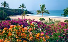 free pictures of tropical beaches - Google Search