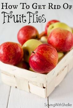 Inexpensive, non-toxic way to get rid of fruit flies for good. This really works!