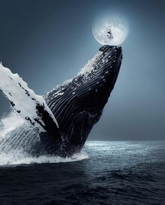 Dancing in the Full Moon. Surrealism Explored Through Photography . By Ted Chin. Moving Wallpapers, Live Wallpapers, Beautiful Sea Creatures, Animals Beautiful, Whale Art, Ocean Creatures, Blue Whale, Humpback Whale, Ocean Life