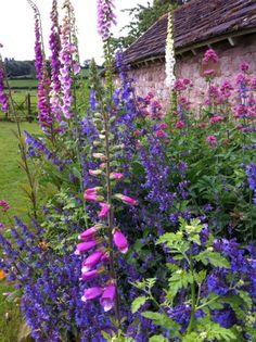Garden Shrubs, Diy Garden, Dream Garden, Garden Landscaping, Cottage Garden Design, English Country Gardens, Garden Planning, Garden Inspiration, Beautiful Gardens