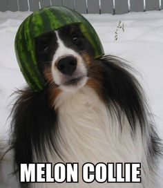 Daily Pic Dump (60 Pics)  If only our border collie Mandy were still alive!