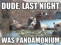 Party hardy, panda.