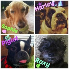 Vote for October's Pet of the Month