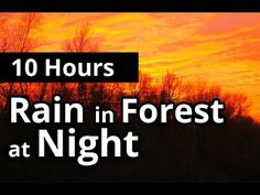 10 HOURS - Night RAIN in FOREST - Sleep Sounds - VERY Relaxing! - http://www.soundstorelax.com/sounds-by-use/10-hours-night-rain-in-forest-sleep-sounds-very-relaxing/