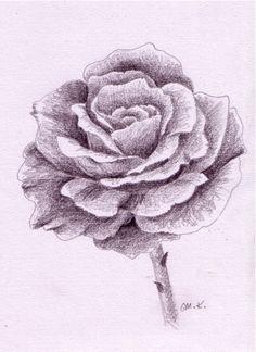 Rose zeichnen Schritt für Schritt#