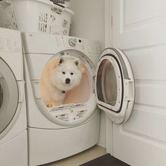 34 Samoyed Saturday Dog Samoyed Photos Who doesnt love cute dogs and are some of the cutest. Animals And Pets, Baby Animals, Funny Animals, Cute Animals, Funny Dogs, Shiba Inu, I Love Dogs, Puppy Love, Cute Puppies