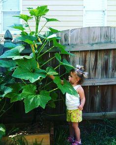 Setiap satu tanaman yang kamu tanam dapat membantu menjernihkan udara di sekitar lho! . . . #INDMIRA #IndmiraPic #Indmira #hydroponics #aquaponics #aqua #plantation #organicproducts #urbanfarming #vertikultur #verticalfarming #hidroponik #hidroponikindonesia #akuaponik #menanam #planting #gogreen #saveearth #savewater #noplastic #nolitering by indmira