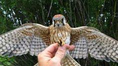 spreading wings birds