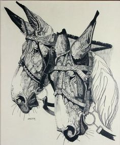 $185 Two Mexican Bridled Mules, Drawings by  Stretch