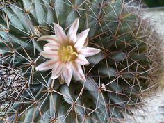 1a flor
