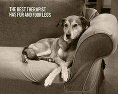 Le meilleur thérapeute a des poils et quatre pattes.