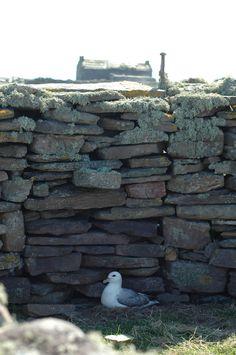 Inside Planticru, North Ronaldsay May12 Cool Sheds, Islands, Britain, Outdoor Decor