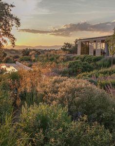 Fernando Martos Garden Design. Spain Meadow Garden, Dry Garden, Home And Garden, Drought Tolerant Garden, Mediterranean Garden, Water Wise, Garden Design, Madrid, Country Roads