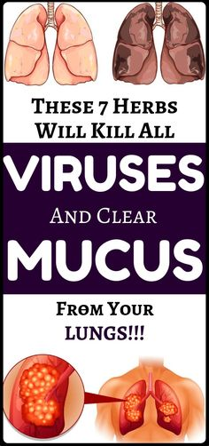 mucus and kill viruses from your lungs with these 7 natural herbs - health and fitness.Remove mucus and kill viruses from your lungs with these 7 natural herbs - health and fitness. Natural Health Remedies, Herbal Remedies, Home Remedies, Natural Health Tips, Health And Wellness, Health Care, Health Fitness, Herbs For Health, Health Advice
