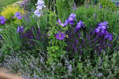 iris and clematis Cottage Garden Plants, Sun Garden, Garden Beds, Iris Flowers, Bulb Flowers, May Flowers, Purple Flowers, Landscape Design, Garden Design