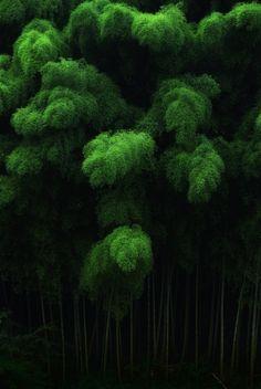 bright green fluffy palms