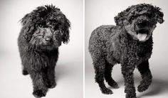 Heartmelting Pics Of Aging Dogs Show Them Grow From Puppyhood To Old Age.