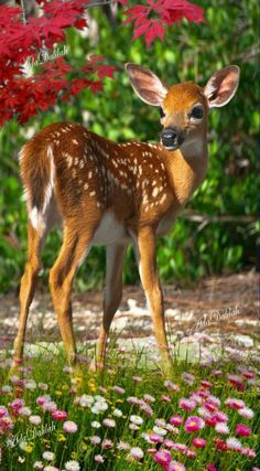 🦌🌹Is this the best deer DIY decor gift you had been looking for? 👇Deer Gifts For Her, Deer. Deer Photos, Deer Pictures, Animal Pictures, Forest Animals, Nature Animals, Animals And Pets, Beautiful Creatures, Animals Beautiful, Deer Photography
