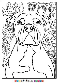 pitbull coloring page coloring page by brittanyfarinaart on etsy