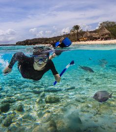 While so many diving & snorkeling destinations require boat trips, almost all diving & snorkeling in Curacao is easily accessed from beaches.