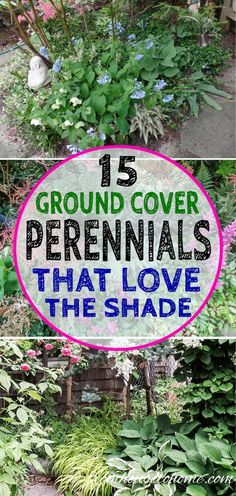 This list of perennial ground covers that love the shade is AWESOME! These are some beautiful flowering plants that I can plant under some bushes to prevent the weeds from growing.