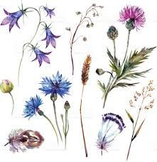 4c5cdbcac Image result for wildflower drawing Wildflower Drawing, Wildflower Tattoo,  Wild Love, Watercolor Tattoo
