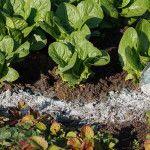 10 ανθεκτικά φυτά για μπαλκόνι | Τα Μυστικά του Κήπου Gardening Tips, Herbs, Vegetables, Plants, Gardening, Stuff Stuff, Planting Vegetables, Herb, Vegetable Recipes
