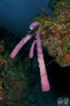 Dykking Bahamas - Dykking på Bahamas